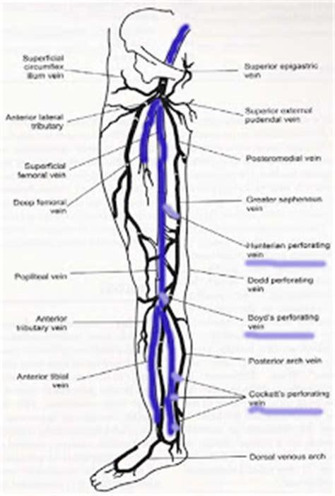 Review Anatomi Klinik Jilid 2 ekstremite ven 246 z anotomi kronik ven 246 z yetmezlik