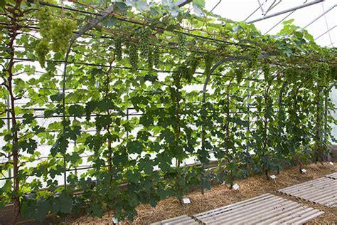 Blog : Pomona Fruits, Buy Fruit Trees, Soft Fruit Bushes