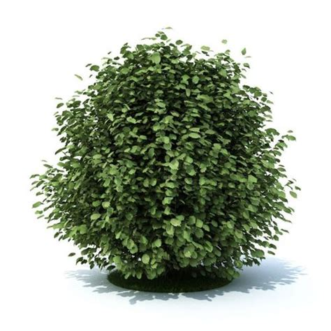 3d green leaf shrub cgtrader