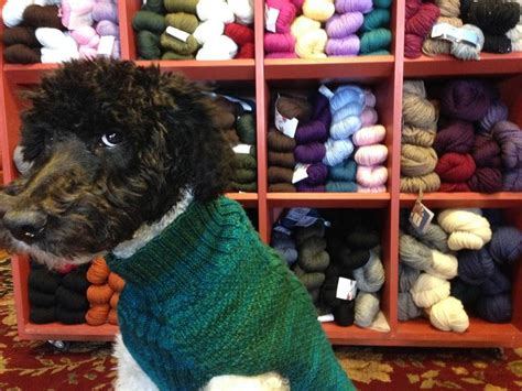 knit knack arvada your pup needs a second coat try it yourself