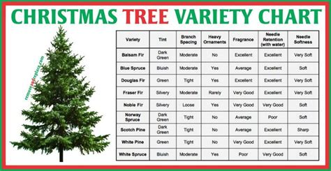 balsam douglas fraser and noble are all types of what the tree type and variety chart lists the balsam blue spruce douglas fraser noble