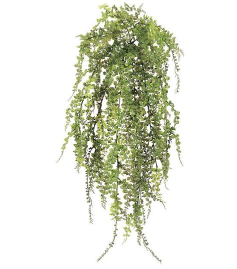 joanns fabric store artificial trees maidenhair fern bush maidenhair fern architecture graphics and architectural presentation