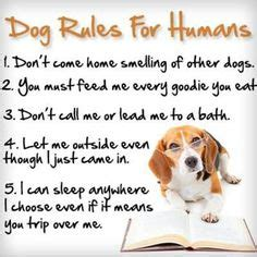 dog house rules 1000 images about doggy stuff on pinterest dog houses dog beds and doggies