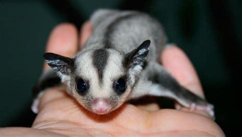 imagenes raras de animales las mascotas m 225 s raras del mundo