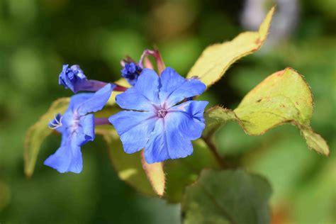 i 38 fiori di bach i 38 fiori di bach armonia fiori di bach