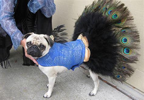 pug spider costume costumes hilarious wars pugs thriller spider