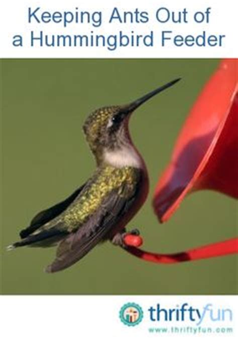 humming bird feeders on pinterest bird feeders glass
