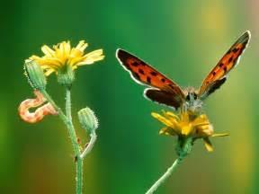 beautiful butterflies butterflies wallpaper 9481973
