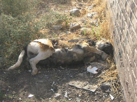 dead dogs dead images