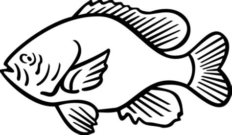 sunfish coloring page ocean sunfish drawing