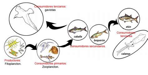 cadena trofica acuatica wikipedia pir 225 mides ecol 243 gicas redes y cadenas tr 243 ficas biolog 237 a