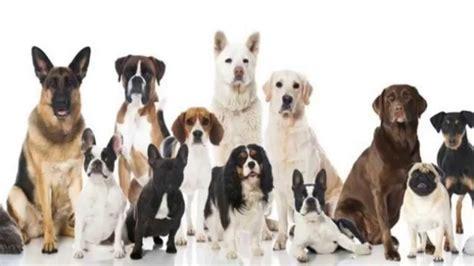 imagenes de animales nuevas especies cuantas especies de animales existen youtube