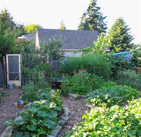 backyard permaculture design urban landless permaculture backyard garden co operative