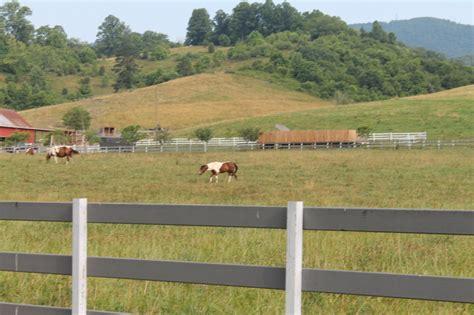 golden retriever farm hammond up swinging bridge road