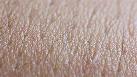 human skin closeup macro dolly stock footage 10828757 peeling skin footage page 2 stock