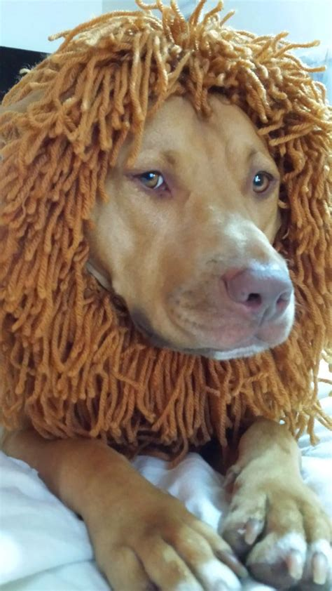mane costume mane wig for and cat costume pet adjustable washable beds and costumes