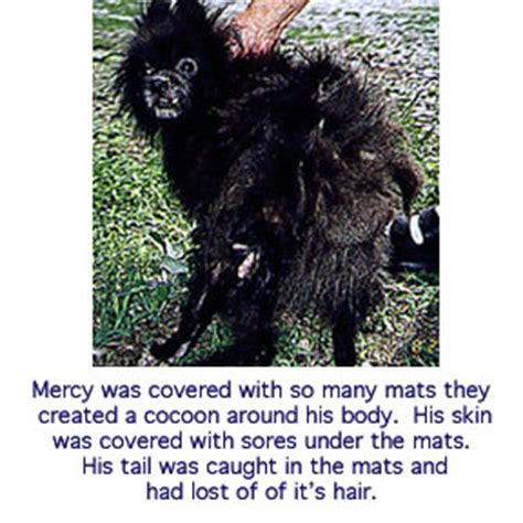 puppy facts for stop puppy mills facts about puppy mills