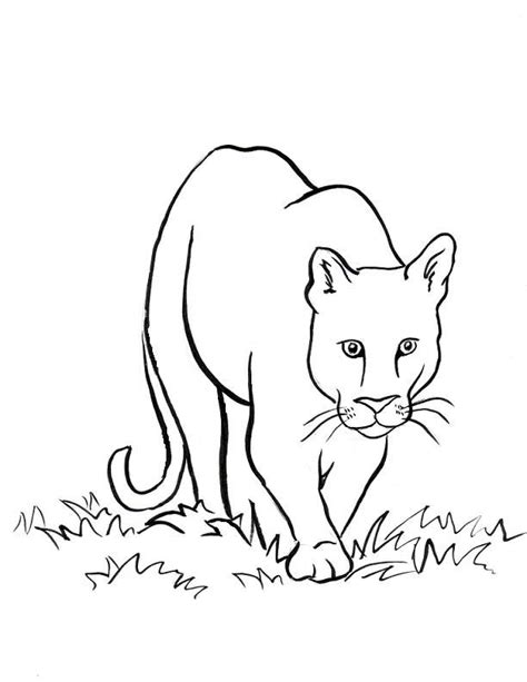 lion paw coloring page mountain lion coloring page coloring home