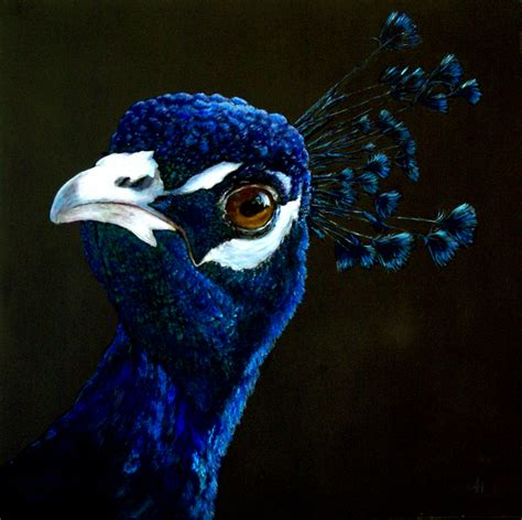 black background painting another bird quot peacock quot wetcanvas