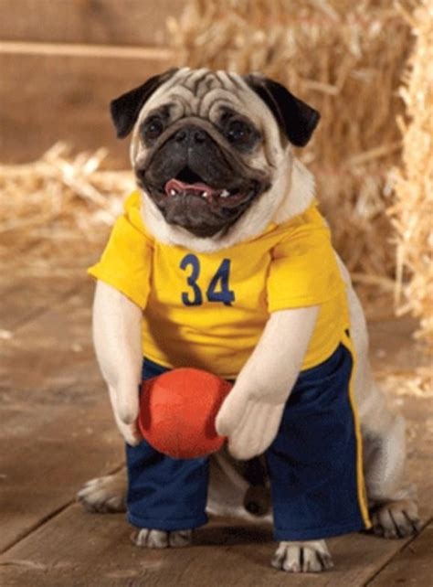 pug costume 24 pug costumes that are so we can t even