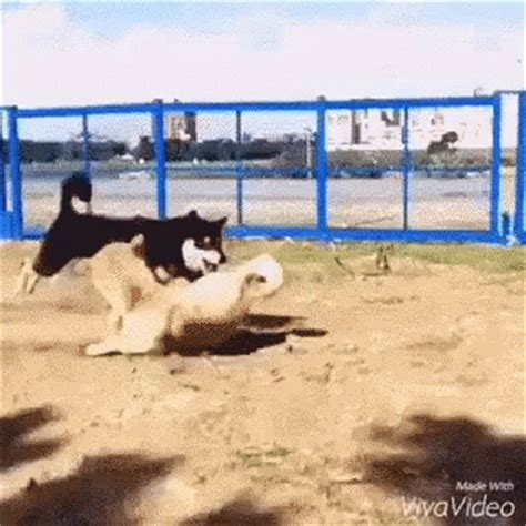 pugs sunglasses 1404 doggo gif doggo skill gifs say more with tenor