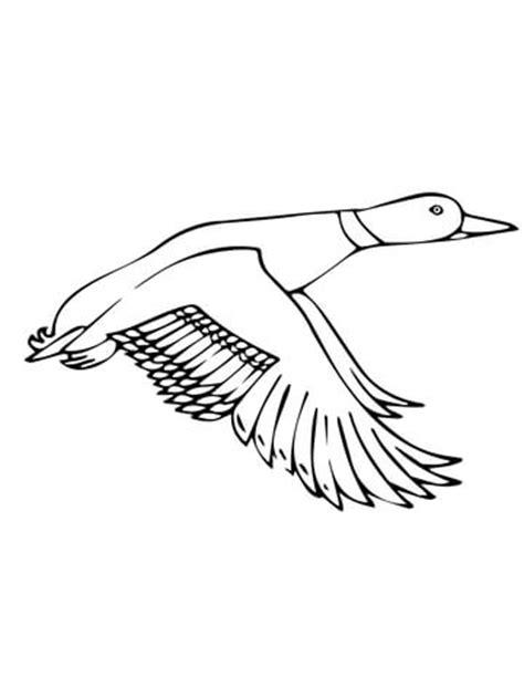 coloring page of a mallard duck flying mallard duck coloring page supercoloring com