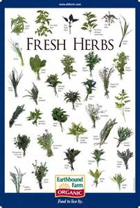 herbs chart fresh herbs id chart earthbound farm organic to market pinterest herbs charts and farms