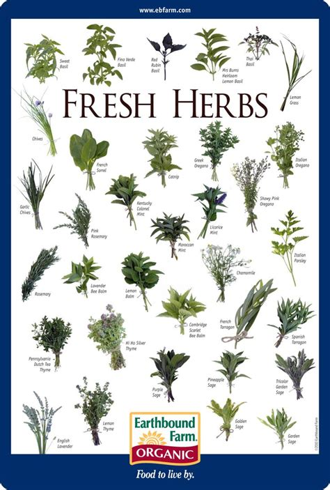 herb chart fresh herbs id chart earthbound farm organic to market