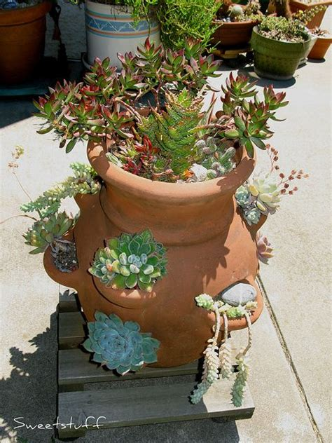 Strawberry Planters For Sale by The 25 Best Ideas About Strawberry Pots On