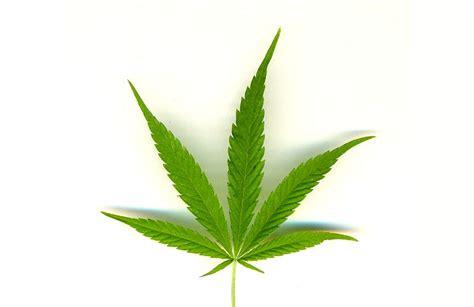 marihuana dibujo