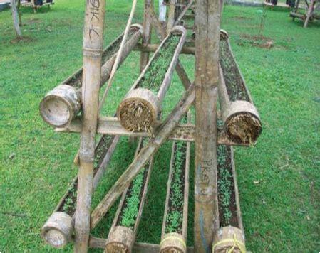 budidaya pertanian bambu indonesia