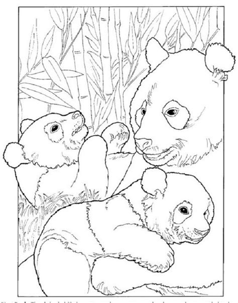 giant pandas life cycles and coloring pages on pinterest