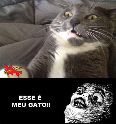 Gato Meme - pin meme assustado on pinterest