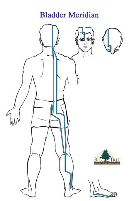 medicine meridians diagram 1525 best images about acu alternative mind