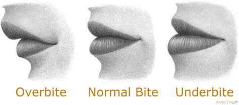 how to a from biting how to draw from the side rapidfireart