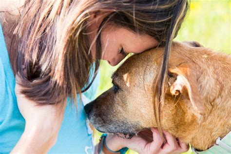 dog only eats from hand 6 medical conditions that dogs can sniff out mnn