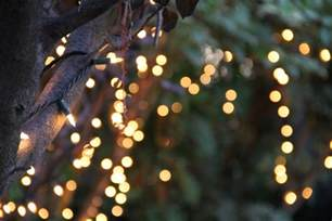 string tree lights bokeh of string lights on tree 187 stock photos