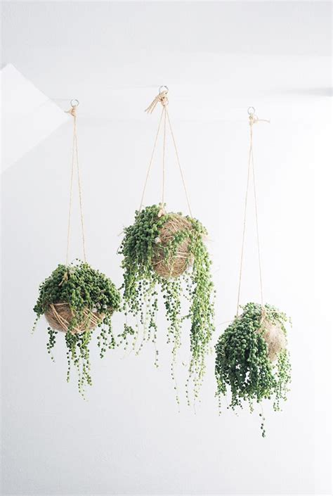 the quot it quot plants of home decor gardens hanging