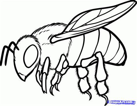 line drawing software free bee line drawing clipart best