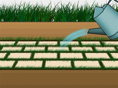 and grass patio how to grow grass between pavers 6 steps with pictures