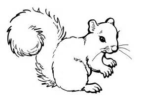 free printable squirrel coloring pages for