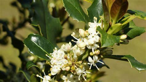 fiori di bach per autostima 4 fiori di bach per l ipersensibilit 224 lifegate