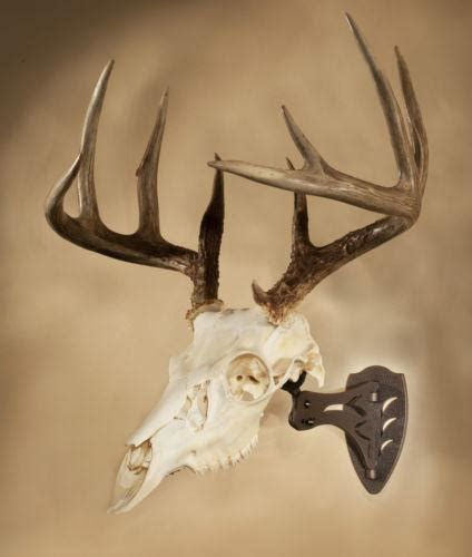 Real Deer Head Wall Mount Deer Skull Taxidermy Ebay