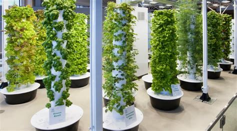 backyard hydroponics image gallery hydroponics tower garden