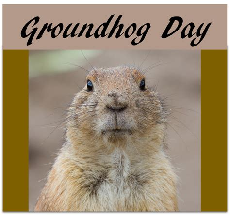 groundhog day 123movies groundhog day 123 28 images 173 best images about