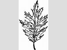 Red Oak Leaf   ClipArt ETC Oak Leaf Pictures Clip Art