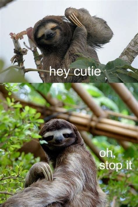 sloths    cute     honestly dont