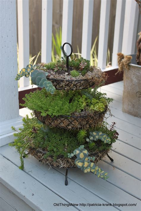 Tiered Planter by Things New Three Tiered Succulants