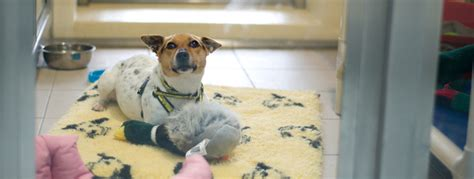 In Essex With Dogs centre updates dogs trust