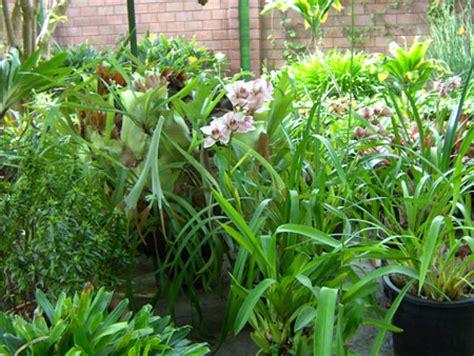 Orchideen Im Garten by Teneriffa Botanischer Garten De La Kanaren